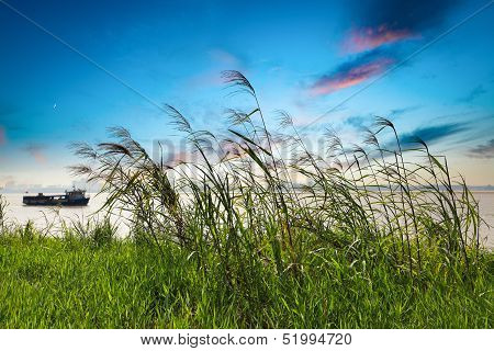 Reed Grass In Sunset Glow
