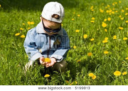 The Boy-dandelion