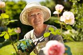 stock photo of prunes  - Senior woman with a pruning shears looking at you smiling in her garden - JPG