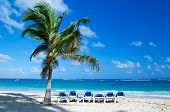 Caribbean Beach and Palm tree  .Paradise. Vacation and Tourism concept.