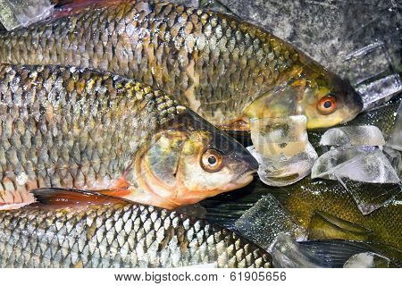Fish on ice at a market