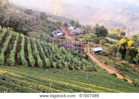 Local village farmer