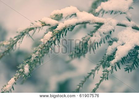 Snow Covered Hemlock Branch - Retro