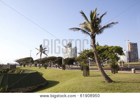 Trees Lining Durban's Golden Mile On Beachfront