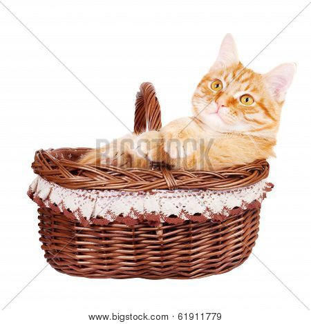 Rad cat sitting in the bascket