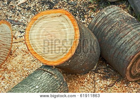 Heap Of Dried Firewood Cutting Logs