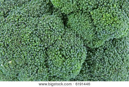 Broccoli Head Close View