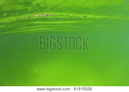 Abstract Background of Green Algae Underwater