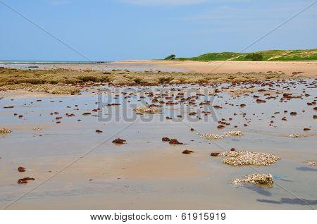 Beach Of Pititinga, Natal (brazil)