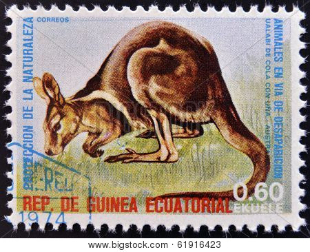 EQUATORIAL GUINEA - CIRCA 1974: Stamp printed in Guinea shows Wallaby Australia