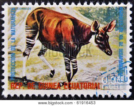 EQUATORIAL GUINEA - CIRCA 1974: Stamp printed in Guinea shows Okapi Africa