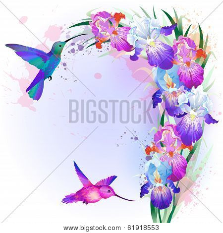 Vector card with Iris flowers and hummingbird