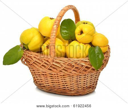 Ripe Quince In The Basket