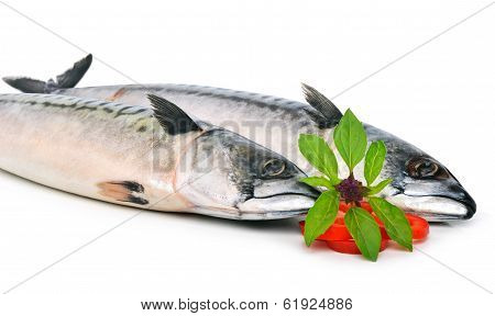 Fresh Mackerels Fish Decorated With Basil Twig And Sweet Pepper