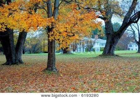 The Estate In Autumn