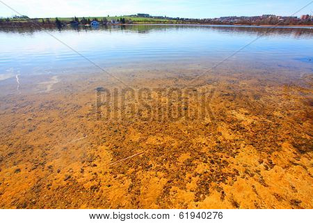 Pure water in The Bolevak Lake ( Bolevecky rybnik ). Famous destination in Pilsen city. Czech Republic, Europe.