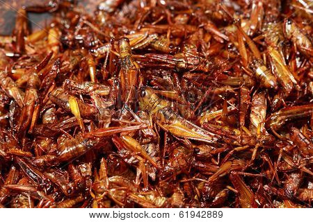 Grasshopper Fried