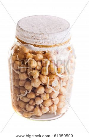 Top View Of Sprouting Chickpeas Growing In A Jar