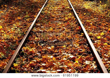Autumn Leaves On The Railway