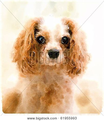 Digital watercolour of Archie the Cavalier King Charles Spaniel