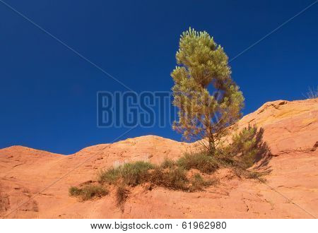 Lonely Pine On The Ocher Hill