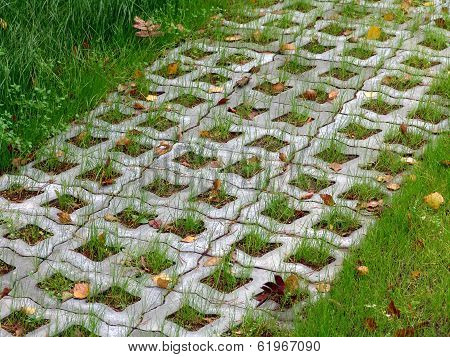 Grass And Paving Slabs