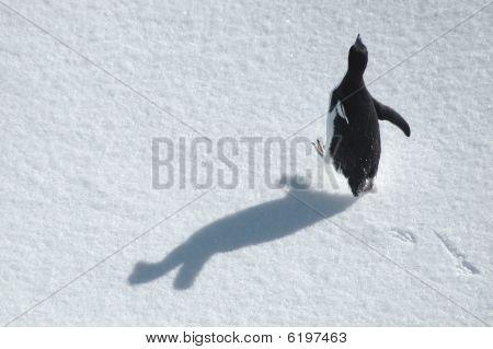 Running Penguin