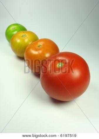 Progress Of Tomatoes Maturing