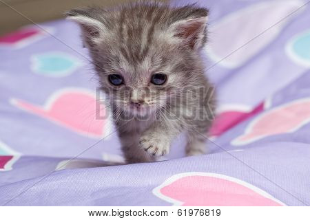 Grey Tabby Kitten on Heart Beanbag