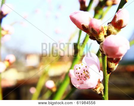 Beautiful Spring Bokeh