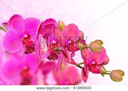 Big Purple Orchid Flowers Branch On Blurred Bokeh