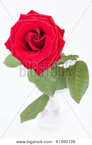 Red Rose In Glass Vase On White