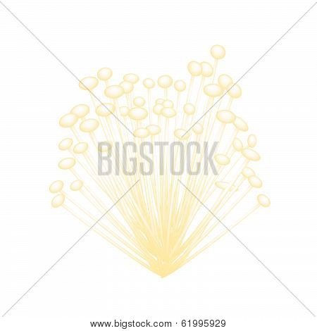 A Group Of Enoki Mushrooms On White Background