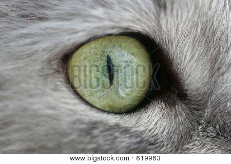 Eye Of A Cat