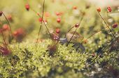 pic of garden snail  - Snails and moss macro shot in the garden or forest