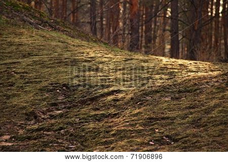 green grass in autumn forest