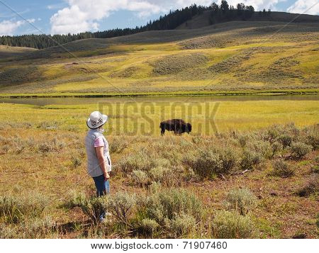 Woman Watching A North American Buffalo Grazing In Field With River In Background
