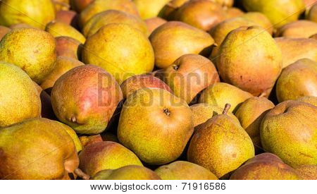 Many Red Pears From Close