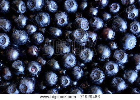 Background blueberries