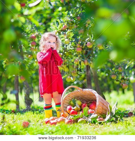 Little Girl Next To An Apple Basket Tpped On Its Side