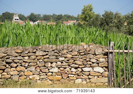 Side view of vintage Corn Plantation and stone wall fence