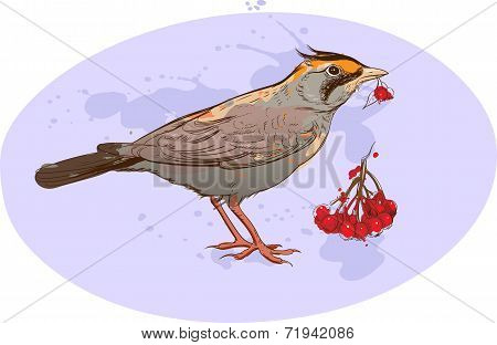 Skylark With Sorbus Berries