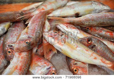 Fresh Fish In A Fish Market