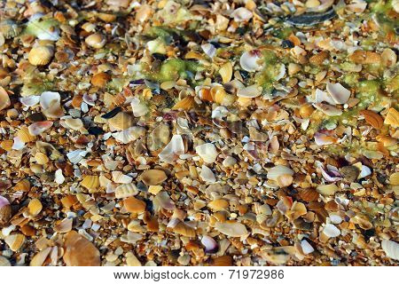 Background Chipped Seashells