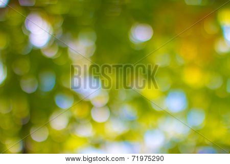 blurry green bokeh background