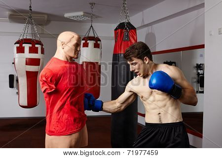 Boxer Training In The Gym