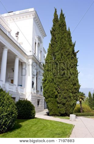 The Cypress Near The Palace