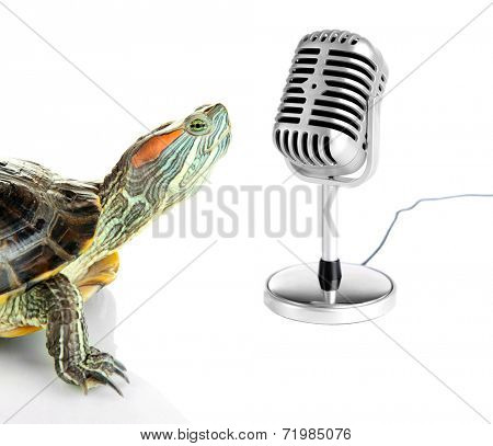 Red ear turtle with microphone isolated on white