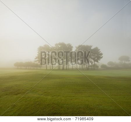 Green grass and tress during misty sunrise
