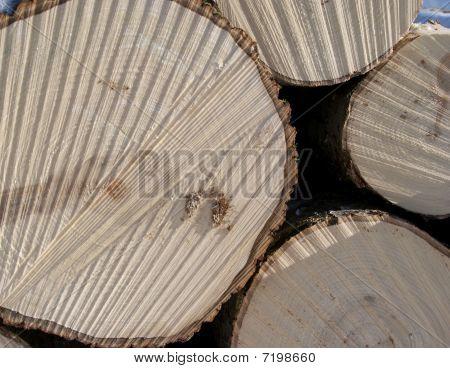 Registros de madera de álamo temblón